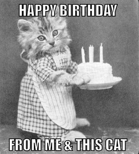 Happy Birthday Memes Funny For Friends With Little Cat