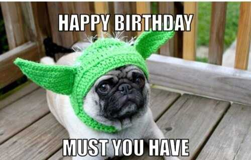 Happy Birthday Memes funny with Pug