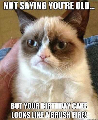 Happy Birthday Memes with Funny Cat