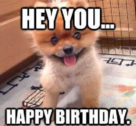 Happy Birthday Memes with cute small dog