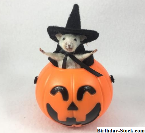 Pumpkin carving ideas 2020 with Taxidermy